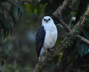 Observação de Aves – Peruíbe – Guaraú