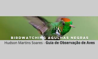 Birdwatching Agulhas Negras - Hudson Martins Soares